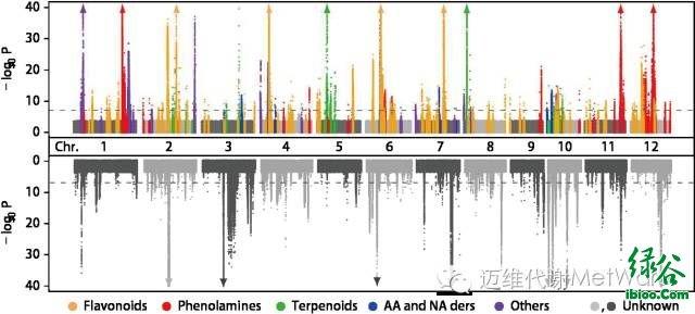 迈维代谢水稻mgwas(代谢物全基因组关联分析)曼哈顿图(2014,nature